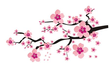 Ветка вишни рисунок